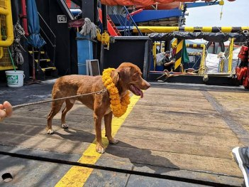 Dog offshore platform